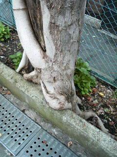 木が気になってます…。(<br />  笑)