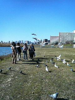 都内野鳥観察イベント