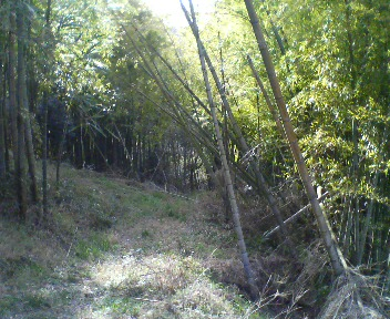 週末は…。竹林と秘密基地